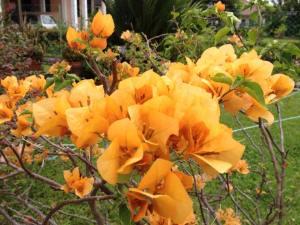 flori portocalii