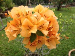flori portocalii1