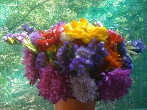 flori 15