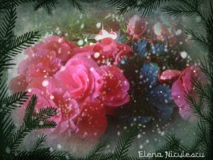 begonia-13-deco-dec